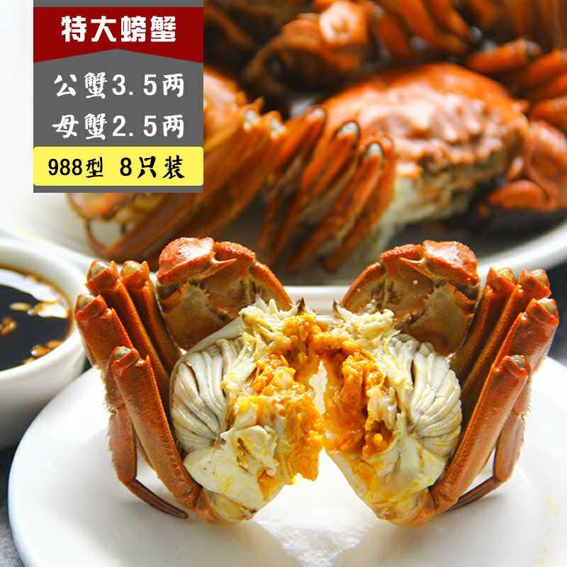 988 B型 公蟹3.5两, 母蟹2.5两